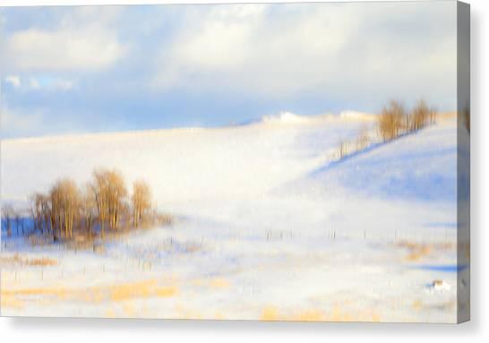Winter Poplars Canvas Print