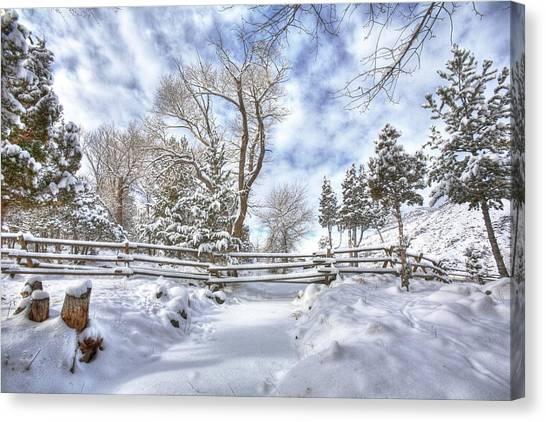 Winter Radiance Canvas Print