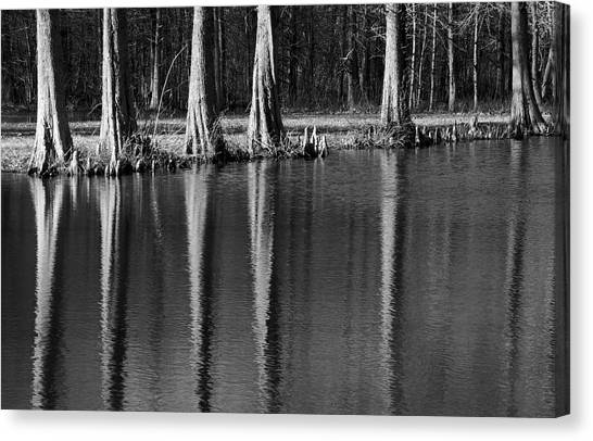 Winter Reflections - Cypress Tree Art Print Canvas Print