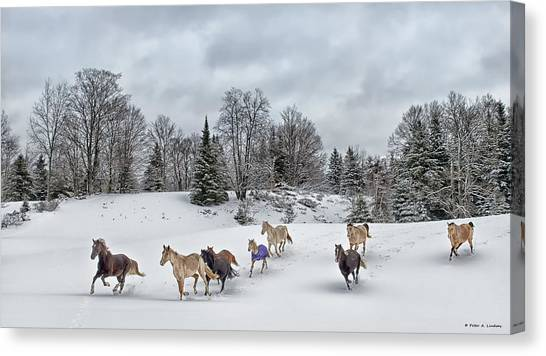 Winter Run Canvas Print by Peter Lindsay
