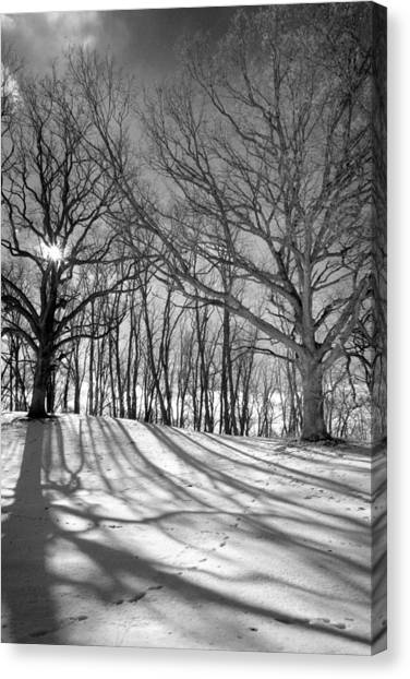 Winter Shadows Canvas Print