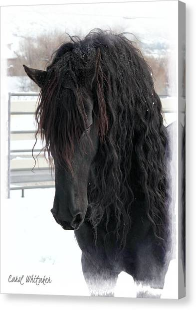 Winter Stallion Canvas Print
