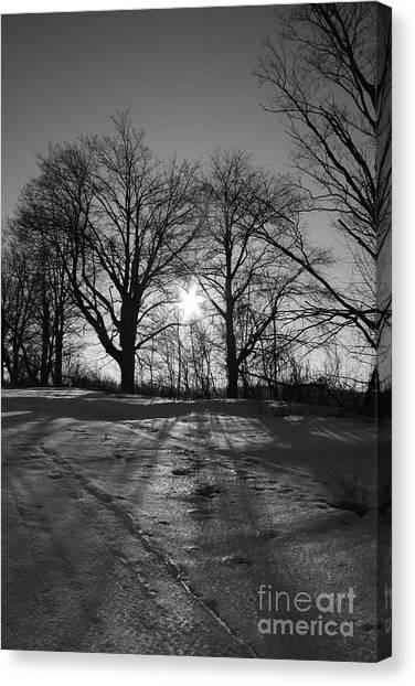 Winter Sun  Canvas Print by Simon Jones