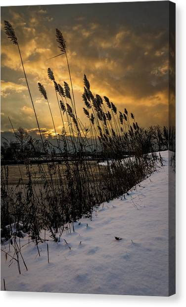 Winter Sunrise Through The Reeds Canvas Print