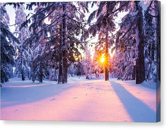Canvas Print featuring the photograph Winter Sunset Through Trees by Priya Ghose