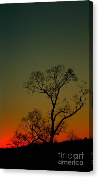 Winter Tree At Sunset Canvas Print
