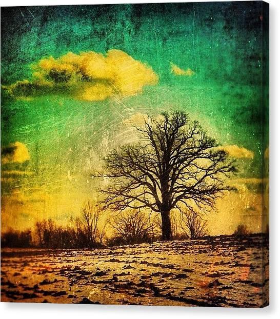 Rural Scenes Canvas Print - Winter Tree by Jill Battaglia