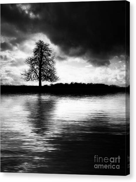 Rainclouds Canvas Print - Winter Tree Light   by Tim Gainey
