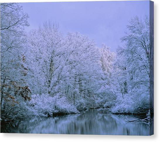 Winter Trees Canvas Print by Carolyn Smith