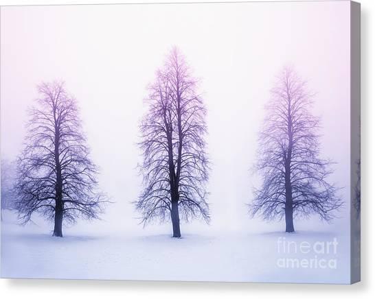 Winter Canvas Print - Winter Trees In Fog At Sunrise by Elena Elisseeva