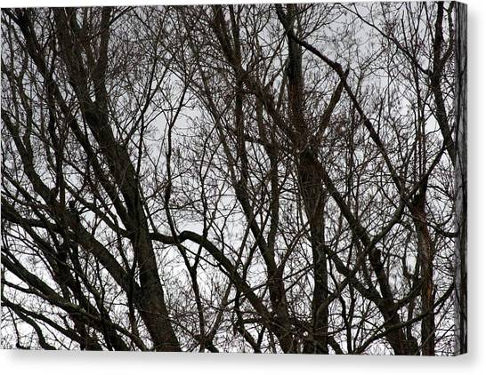 Winter Trees Number One Canvas Print