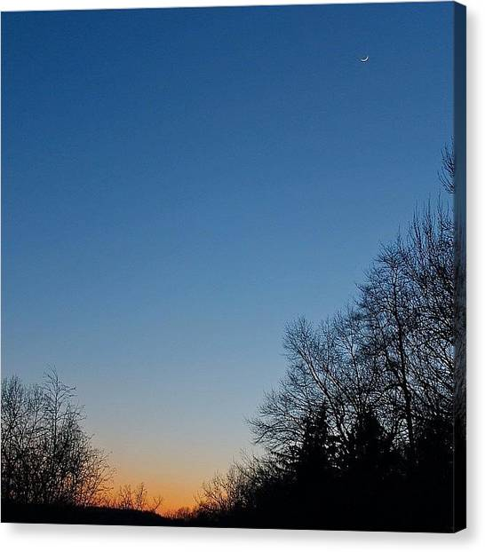 Orange Tree Canvas Print - Winter Twilight Colors by Justin Connor