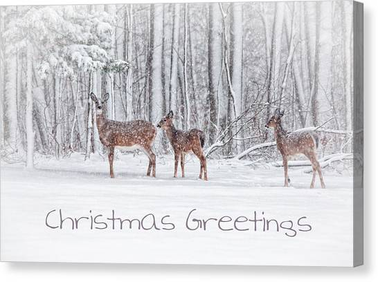 Winter Visits Card Canvas Print