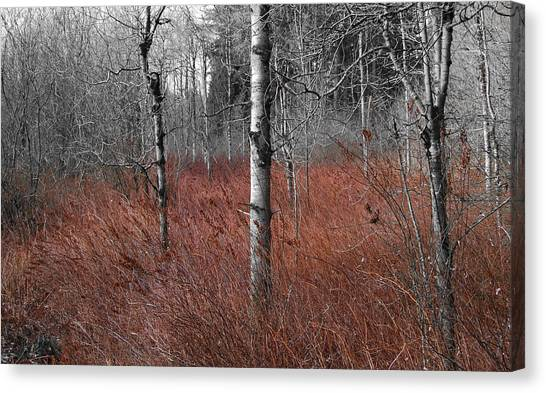 Canvas Print featuring the photograph Winter Wetland by Jani Freimann