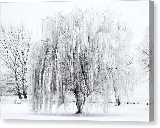 Ice Canvas Print - Winter Willow by Mike  Dawson