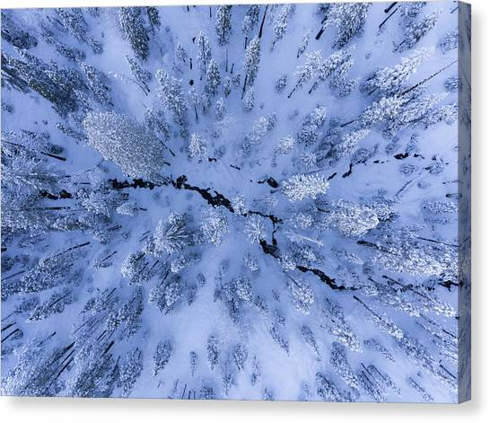Pine Trees Canvas Print - Winter Wonderland by Gerald Macua