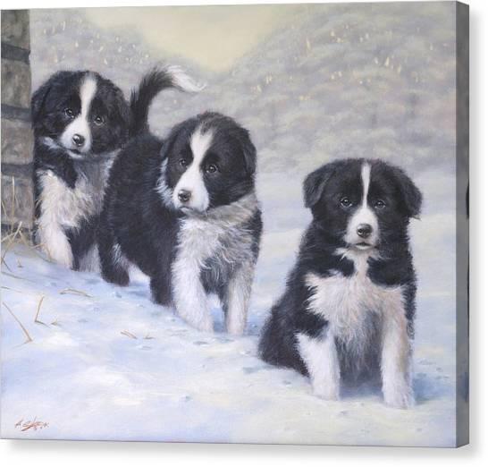 Border Collies Canvas Print - Winter Wonderland by John Silver