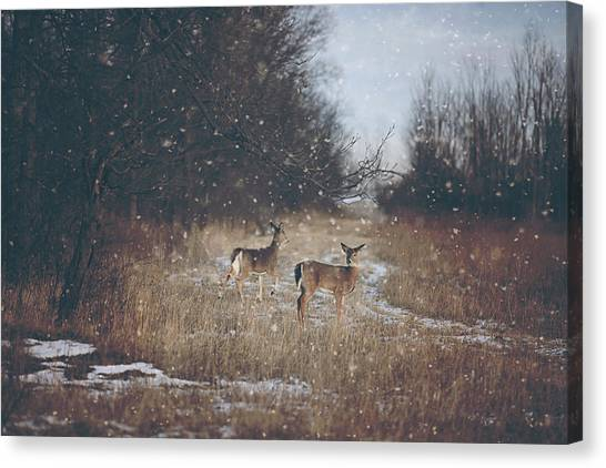 Winter Landscapes Canvas Print - Winter Wonders by Carrie Ann Grippo-Pike
