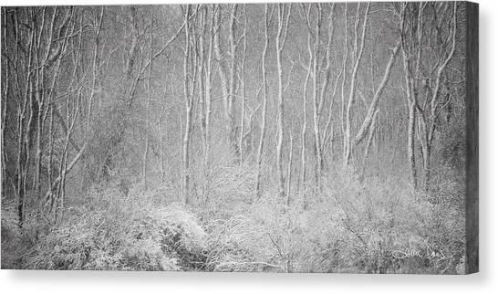 Winter Wood 2013 Canvas Print