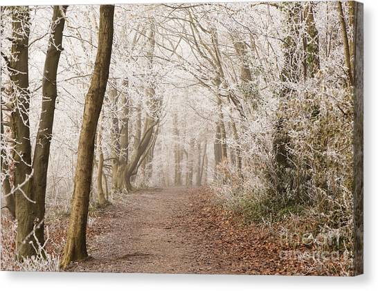 United Way Canvas Print - Winter Woods by Anne Gilbert