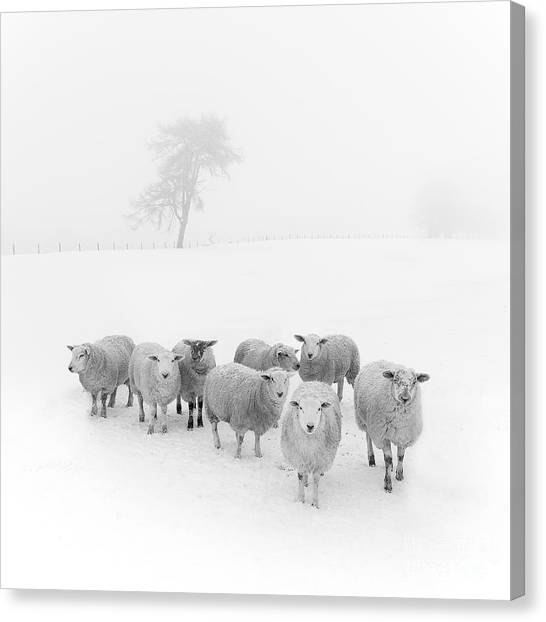 Trees In Snow Canvas Print - Winter Woollies by Janet Burdon
