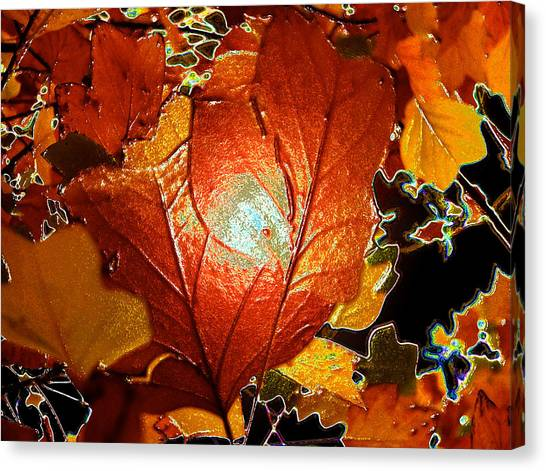 winters autumn in Pasadena Canvas Print