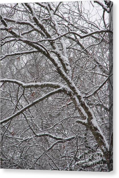 Winter's Beauty Canvas Print by Roxy Riou