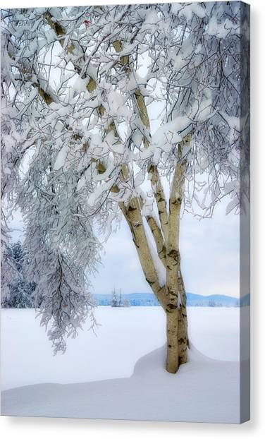 Winter's Dream Canvas Print