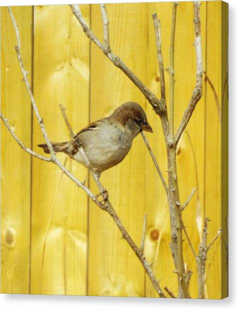 Canvas Print - Winters End The Sparrows Branch  by Lisa Roy