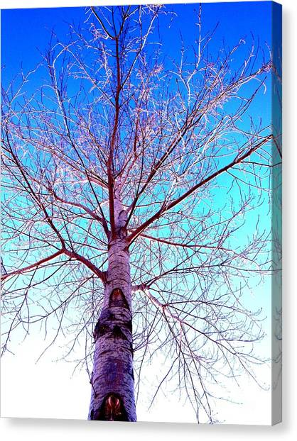 Winters Freeze Canvas Print by Sharon Costa