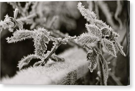 Winters Frost Canvas Print by Karen Grist