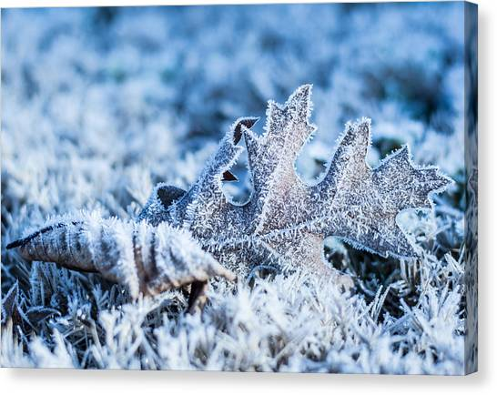 Winter's Icy Grip Canvas Print