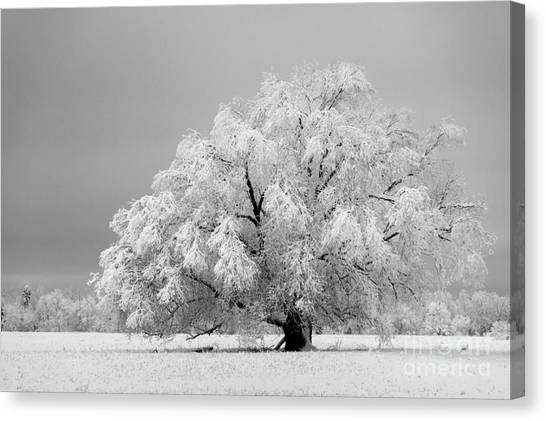 Winter's Majesty II Canvas Print
