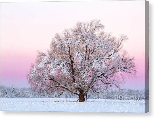 Winter's Majesty Morning Canvas Print