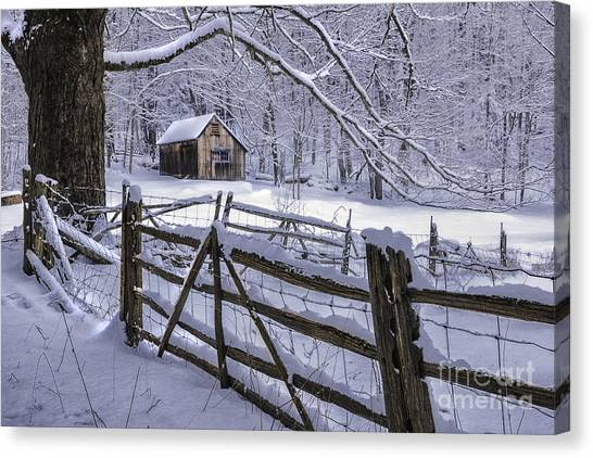 Winter's Mystique   Canvas Print