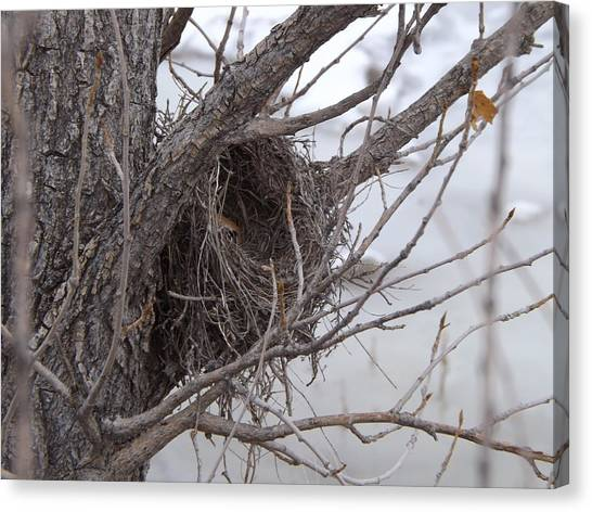 Winter's Nest Canvas Print