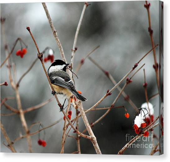 Wintertime Chickadee Canvas Print