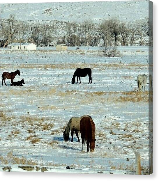 Trucks Canvas Print - Wintery Horses by Kelli Stowe