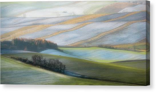 Shrub Canvas Print - Wintry Haze by Marek Boguszak