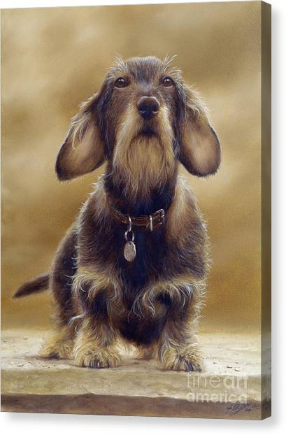 Border Collies Canvas Print - Wire Haired Dachshund by John Silver