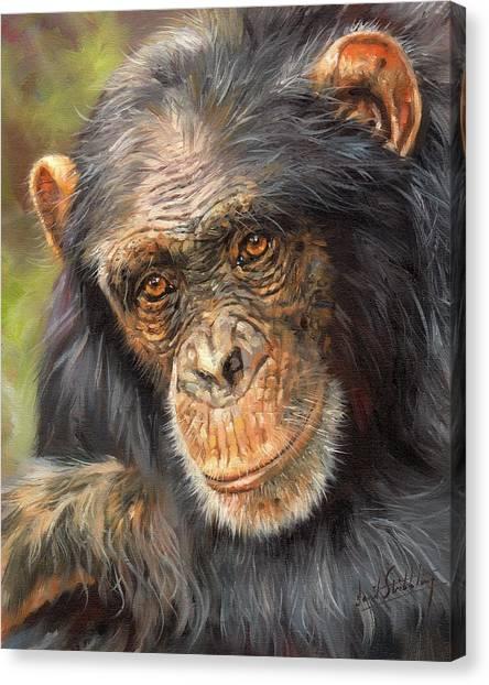 Chimpanzee Canvas Print - Wise Eyes by David Stribbling