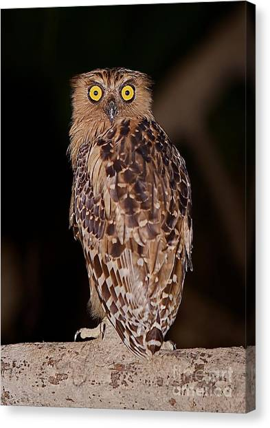 Wise Eyes.  Canvas Print