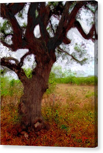 Da214 Wise Old Tree By Daniel Adams Canvas Print