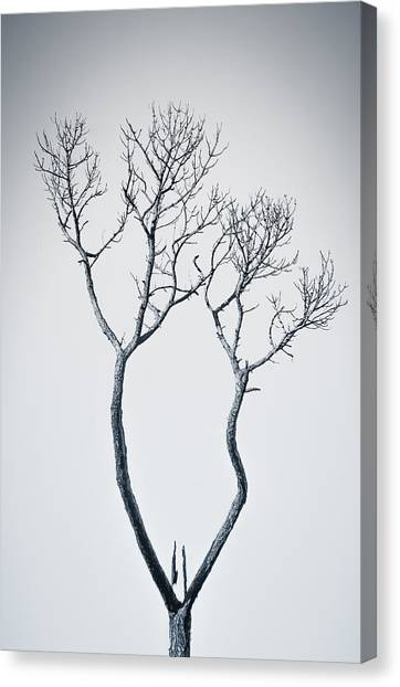Wishbone Tree Canvas Print