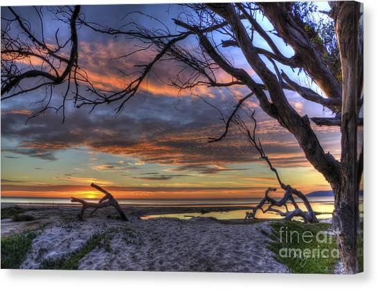 Wishing Branch Sunset Canvas Print