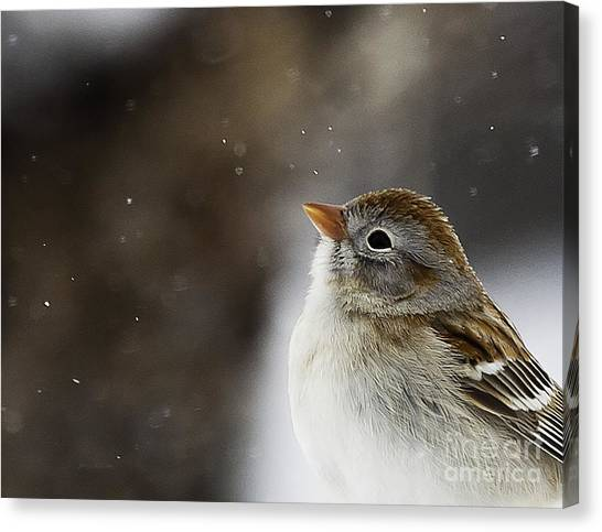 Wishing Upon A Snowflake  Canvas Print