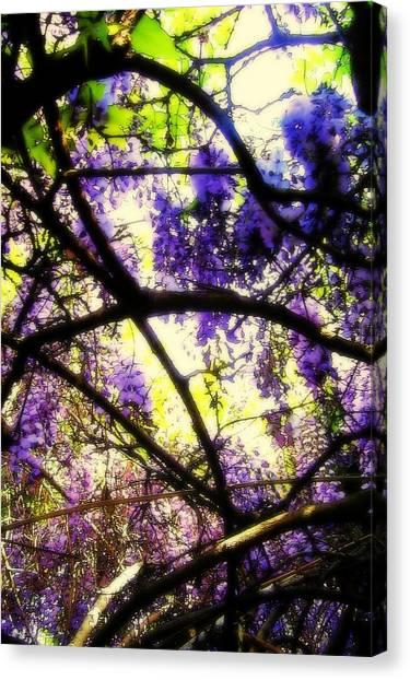 Wisteria Branches Canvas Print
