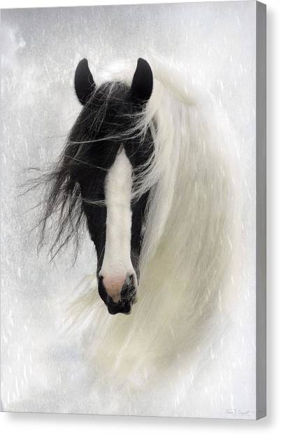 Equine Canvas Print - Wisteria  by Fran J Scott