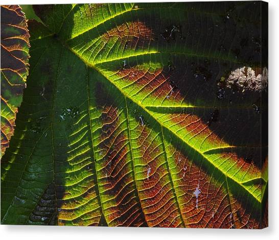 Witchhobble Leaf Detail Canvas Print