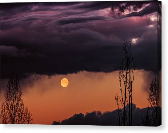 Wolf Moon Canvas Print by Roger Chenery